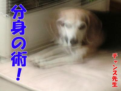 チャンスとティアラ+ココ-20120427-3-400.jpg