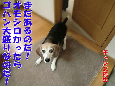 チャンスとティアラ+ココ-20120427-4-400.jpg