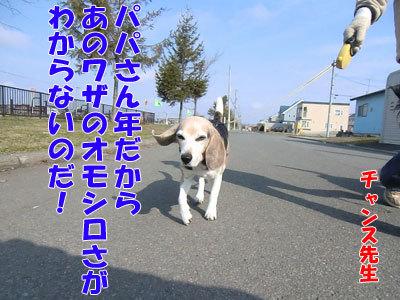 チャンスとティアラ+ココ-20120427-6-400.jpg