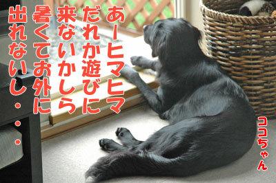 チャンスとティアラ+ココ-20100909-1-400.jpg