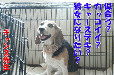 チャンスとティアラ+ココ-20100909-2-400.jpg