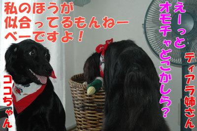 チャンスとティアラ+ココ-20100909-5-400.jpg