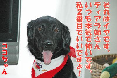 チャンスとティアラ+ココ-20100909-8-400.jpg