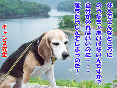 チャンスとティアラ+ココ-20120429-1-400.jpg