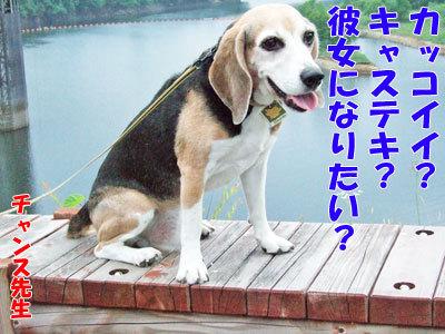 チャンスとティアラ+ココ-20120429-2-400.jpg