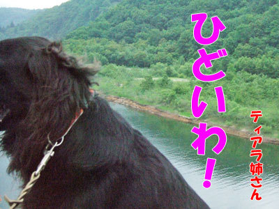 チャンスとティアラ+ココ-20120429-3-400.jpg