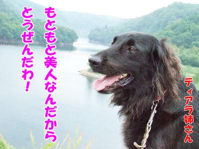 チャンスとティアラ+ココ-20120429-4-400.jpg