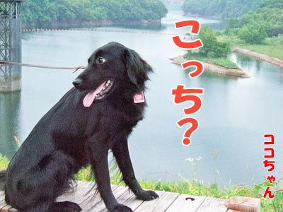 チャンスとティアラ+ココ-20120429-6-400.jpg