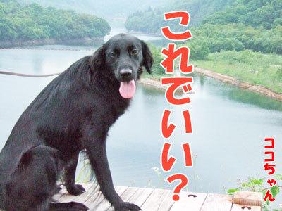 チャンスとティアラ+ココ-20120429-7-400.jpg