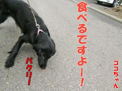 チャンスとティアラ+ココ-20120430-4-400.jpg