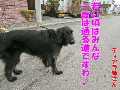 チャンスとティアラ+ココ-20120430-5-400.jpg