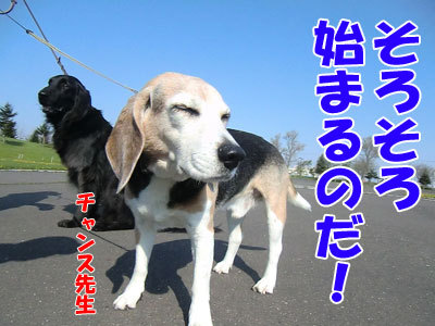 チャンスとティアラ+ココ-20120522-1-400.jpg