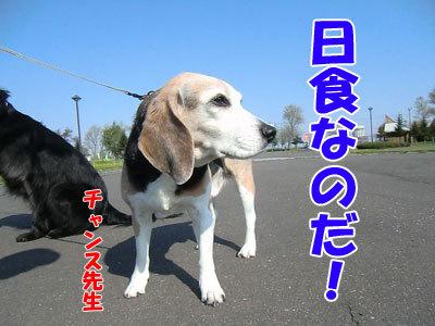 チャンスとティアラ+ココ-20120522-2-400.jpg