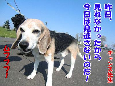 チャンスとティアラ+ココ-20120522-3-400.jpg