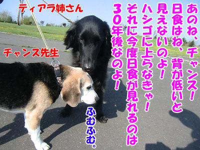 チャンスとティアラ+ココ-20120522-6-400.jpg