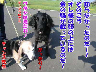 チャンスとティアラ+ココ-20120522-7-400.jpg