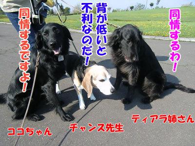 チャンスとティアラ+ココ-20120522-8-400.jpg