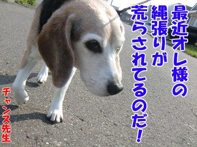 チャンスとティアラ+ココ-20120523-1-400.jpg