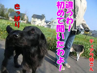 チャンスとティアラ+ココ-20120523-2-400.jpg