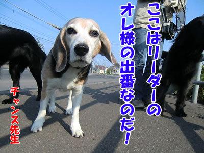 チャンスとティアラ+ココ-20120523-7-400.jpg