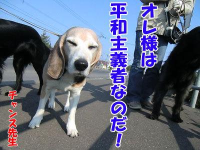 チャンスとティアラ+ココ-20120523-9-400.jpg