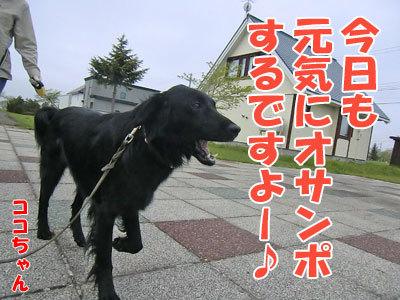 チャンスとティアラ+ココ-20120524-6-400.jpg