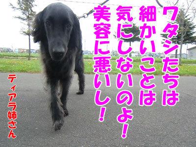 チャンスとティアラ+ココ-20120524-7-400.jpg