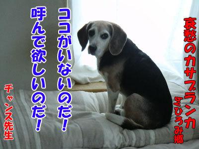 チャンスとティアラ+ココ-20120524-8-400.jpg