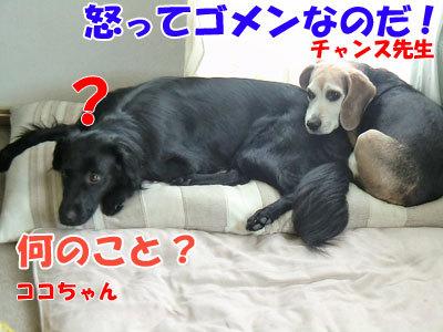 チャンスとティアラ+ココ-20120524-9-400.jpg