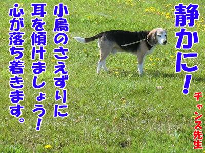 チャンスとティアラ+ココ-20120525-1-400.jpg