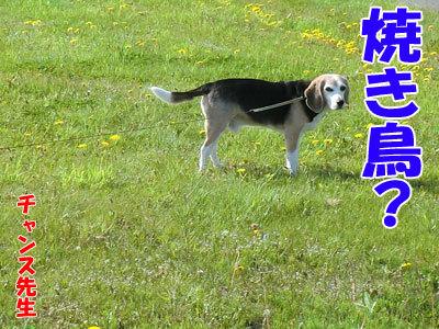 チャンスとティアラ+ココ-20120525-2-400.jpg