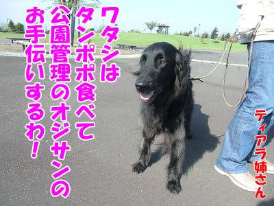 チャンスとティアラ+ココ-20120525-3-400.jpg