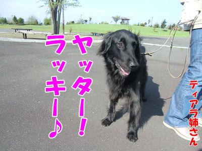 チャンスとティアラ+ココ-20120525-4-400.jpg