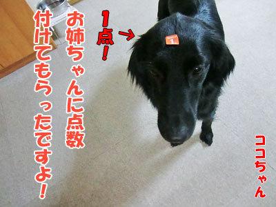 チャンスとティアラ+ココ-20120525-6-400.jpg