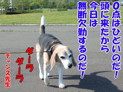 チャンスとティアラ+ココ-20120525-7-400.jpg