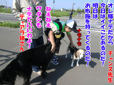 チャンスとティアラ+ココ-20120526-1-400.jpg