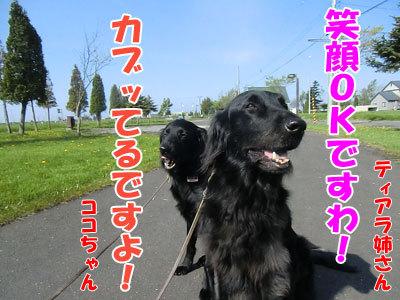 チャンスとティアラ+ココ-20120526-3-400.jpg