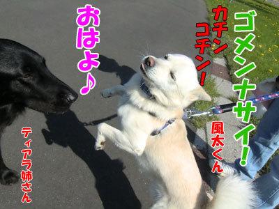 チャンスとティアラ+ココ-20120526-5-400.jpg