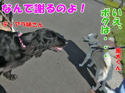 チャンスとティアラ+ココ-20120526-6-400.jpg