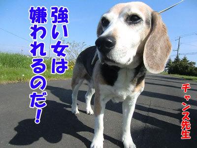 チャンスとティアラ+ココ-20120526-8-400.jpg