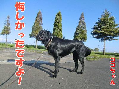 チャンスとティアラ+ココ-20120528-2-400.jpg