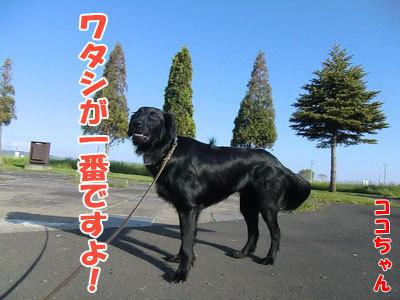 チャンスとティアラ+ココ-20120528-3-400.jpg
