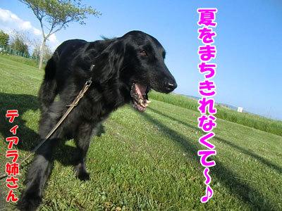チャンスとティアラ+ココ-20120528-5-400.jpg