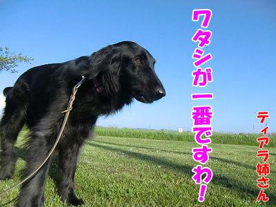 チャンスとティアラ+ココ-20120528-6-400.jpg