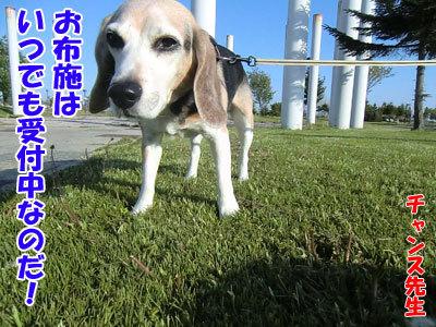 チャンスとティアラ+ココ-20120528-9-400.jpg