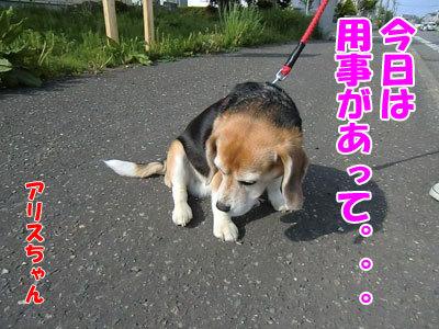 チャンスとティアラ+ココ-20120529-2-400.jpg