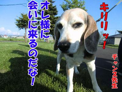 チャンスとティアラ+ココ-20120529-3-400.jpg