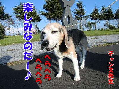 チャンスとティアラ+ココ-20120529-4-400.jpg