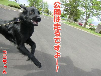 チャンスとティアラ+ココ-20120529-5-400.jpg