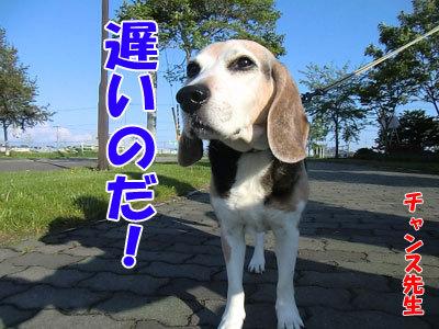チャンスとティアラ+ココ-20120529-6-400.jpg